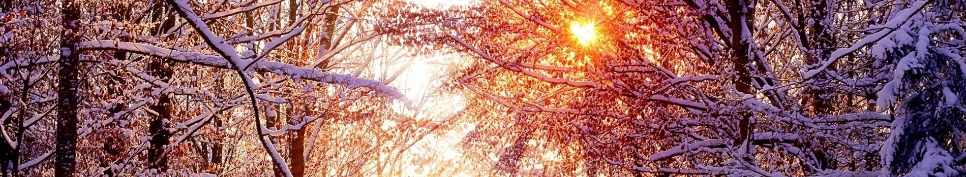 Trees-in-winter-1900x350